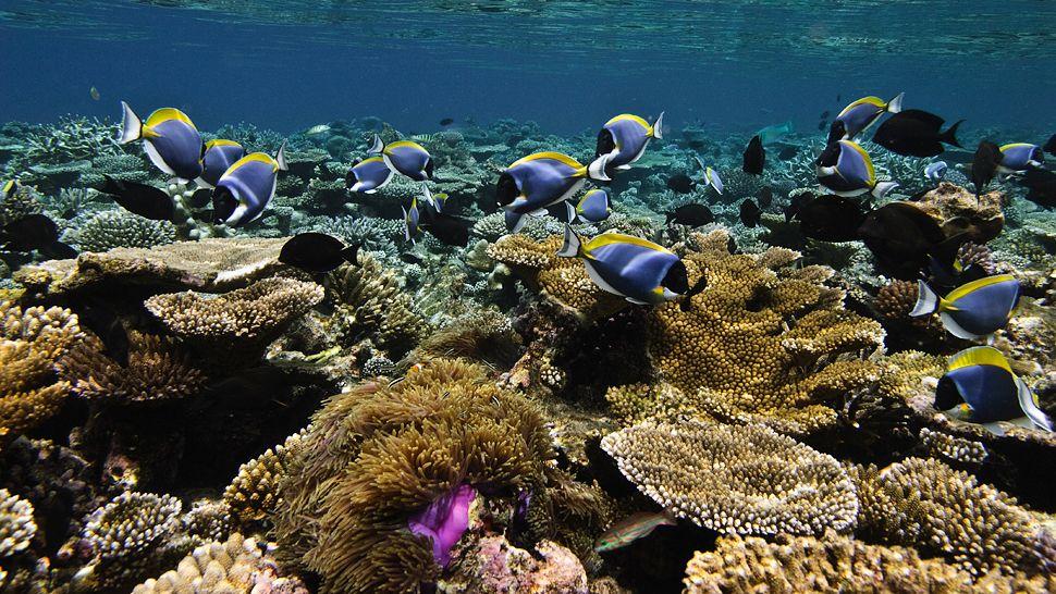 Jamaica Reef Sea Life