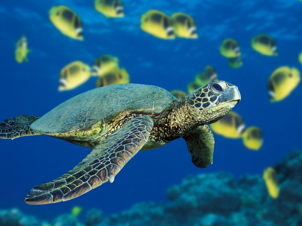 Sea Turtles in Jamaica