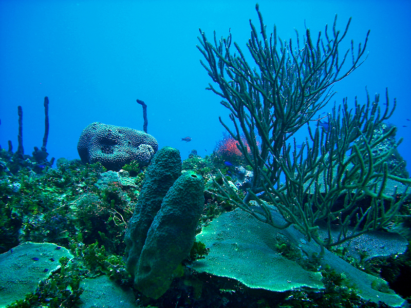 Underwater Reef in Jamaica