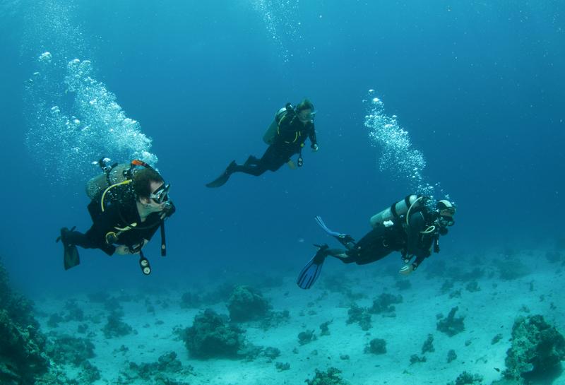 Underwater Reef Exploration in Negril, Jamaica