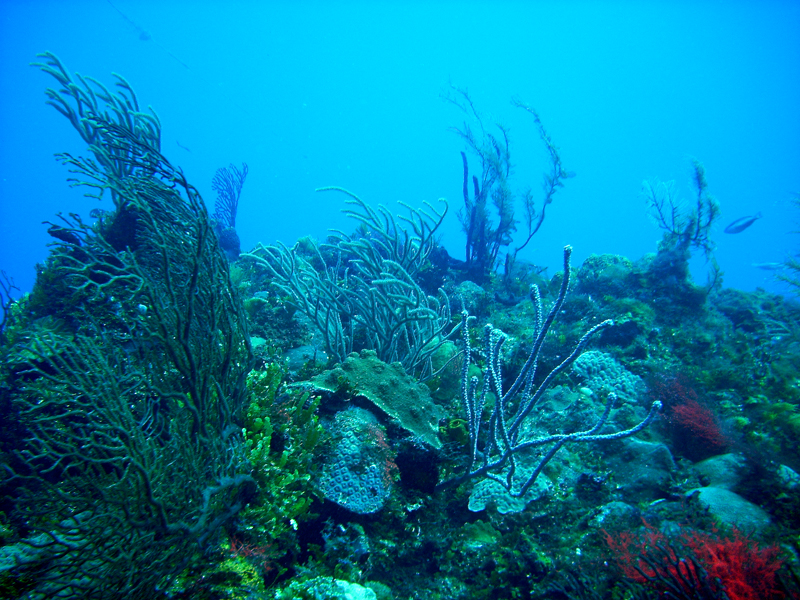 Scuba Diving in the Reef off Negril, Jamaica
