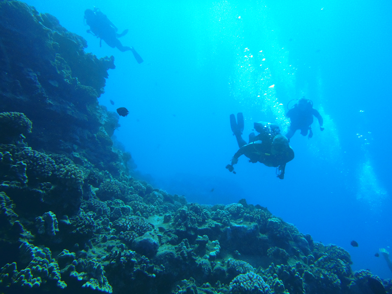Underwater Reef Diving in Negril, Jamaica
