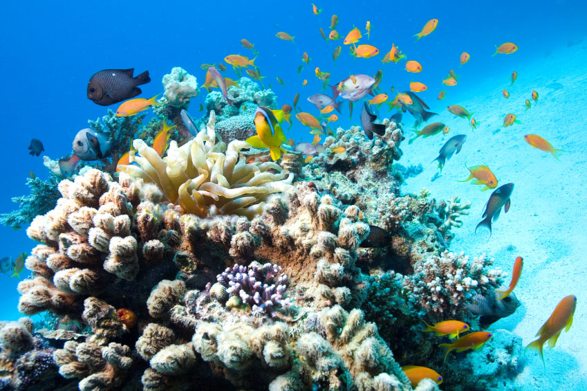 Abundant Sea Life on the Beautiful Underwater Reef