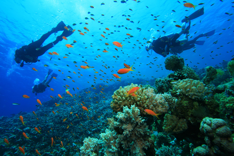 Visit Jamaica For The Best Scuba Diving Experiences